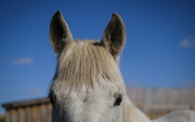 Why Horses: Animals and Psychoeducation