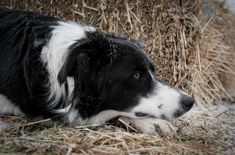 Life Lessons from a Border Collie: E-Motion Needs to Move
