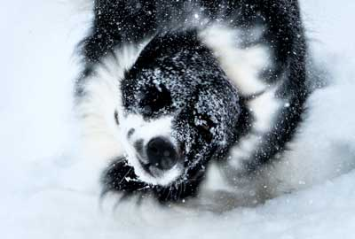 Maggie-in-snow06