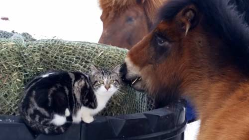 Therapy-horse-and-cat