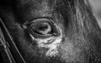Why Horses: What Does the Research Say?