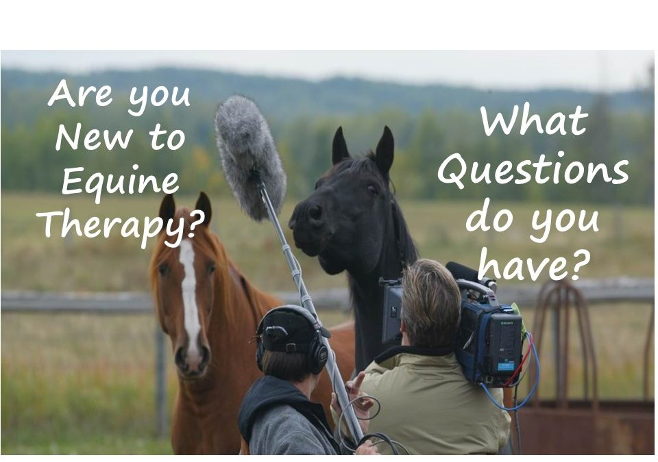 Getting Started in Equine Therapy: FAQs