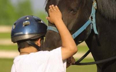Q10: How Can I Gain Experience in Equine Therapy Before I am Certified?
