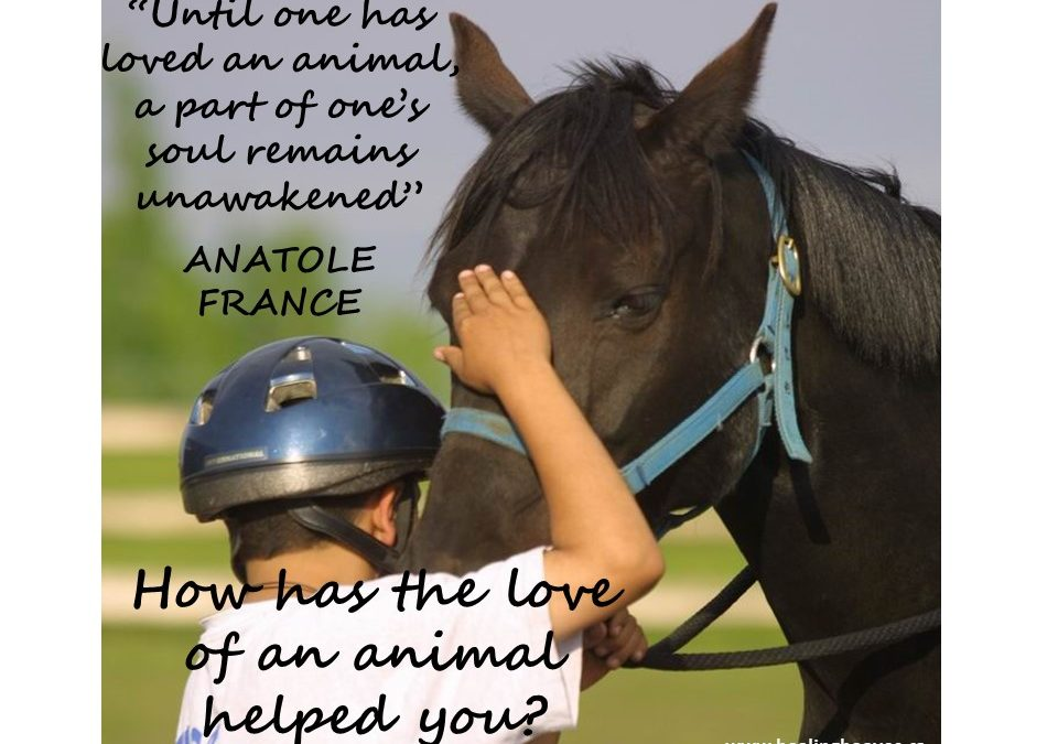 The Love of an Animal