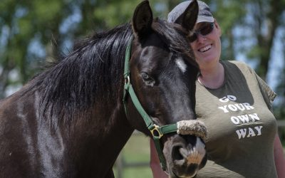 Q2: Do I Need to be a Counsellor to work in Equine Therapy?