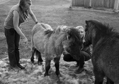 Healing Hooves Equine Facilitated Wellness
