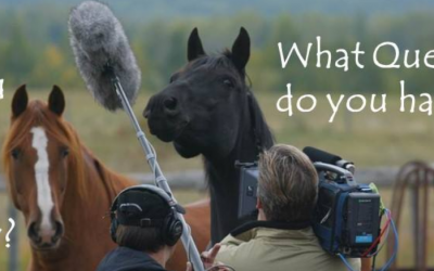 Getting Started in Equine Therapy: FAQ's
