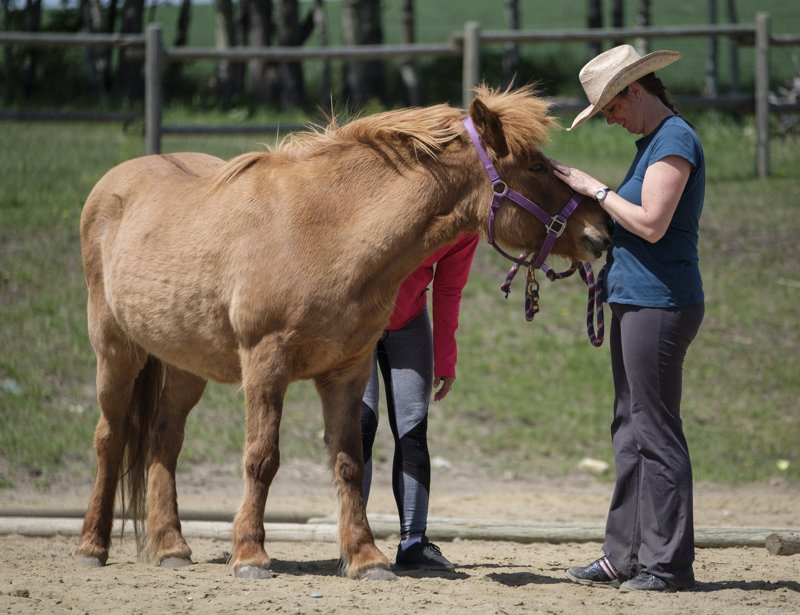 Q5: Who Should I Certify With in Equine Therapy?