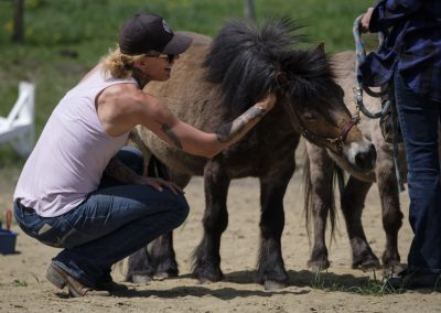 Healing Hooves Equine Facilitated Wellness