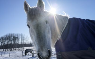 How do you Keep your Equine Therapy Animals, and Practice, Thriving in Winter Weather?