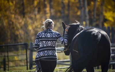 Q1: What are Equine and Animal Assisted Therapy?
