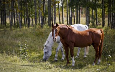 Ethics: Interests of the Four Legged Therapists